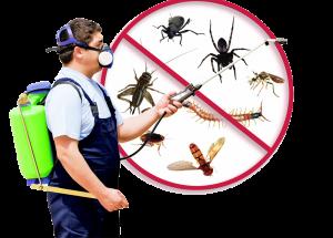 pest control ipoh